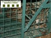 Confirman la condena de 90.000 euros y tres años de inhabilitación al dueño del coto donde murió el lince Grazalema