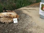 Temen acuerdos entre la Junta y eléctricas para paralizar sanciones por la muerte de aves
