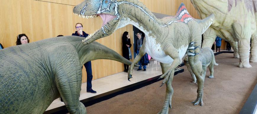 Museo_Paleontologico_Cuenca_18_63