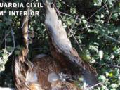 Detenido un hombre de 63 años tras hallarse en su finca de Lagartera 3 milanos reales y 3 zorros muertos