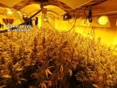 marihuanacasarrubios1