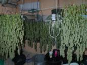 La marihuana estaba en una casa de Magán: 26 kilos de cogollo y tres detenidos