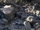 La oveja náufraga que lleva nueve años viviendo en una pequeña isla de Entrepeñas