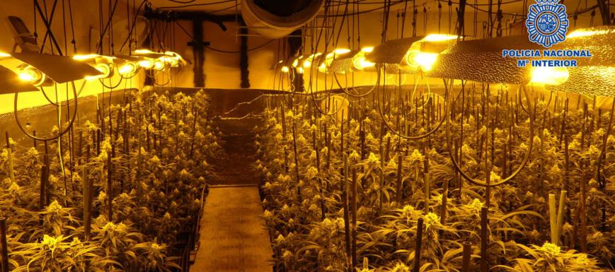 marihuana_arges