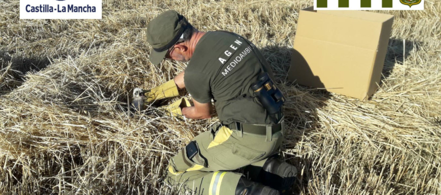 rescate_aguiluchos_agente_medioambiental_