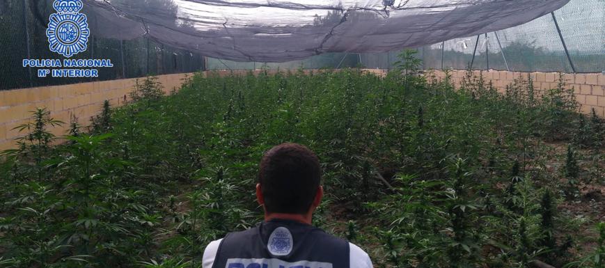 Cultivo_marihuana_Talavera_